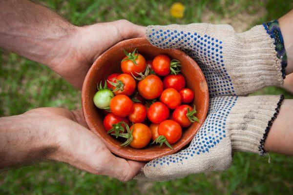 About the Farmers | Mighty Oaks Farm Maine